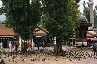 Der zentrale Platz Sarajevos heißt Ba?èar?ija Platz. Oft wird er aber einfach der Tauben Platz genannt.
