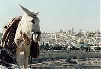 Blick auf die heilige Stadt Jerusalem